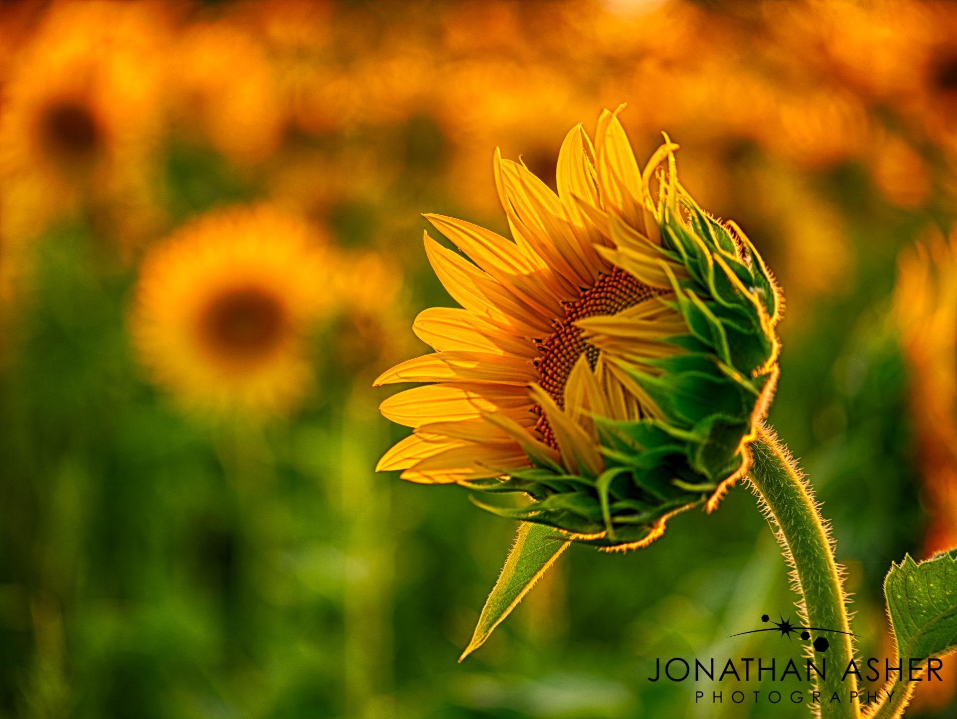 Jonathan Asher Photography